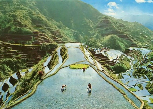 Ifugao Province, Banaue Rice Terraces, Postcard 1982