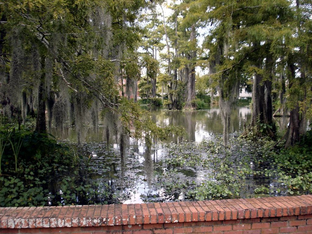 University Of Louisiana At Lafayette Campus Map.Swamp On Ul Lafayette Campus Clancy Ratliff Flickr