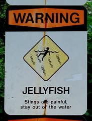 Pailoa Bay: Jellyfish