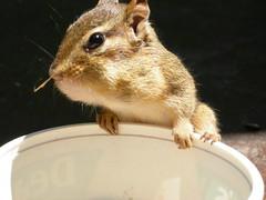 animal(1.0), squirrel(1.0), rodent(1.0), pet(1.0), mouse(1.0), fauna(1.0), chipmunk(1.0), degu(1.0), whiskers(1.0), gerbil(1.0),