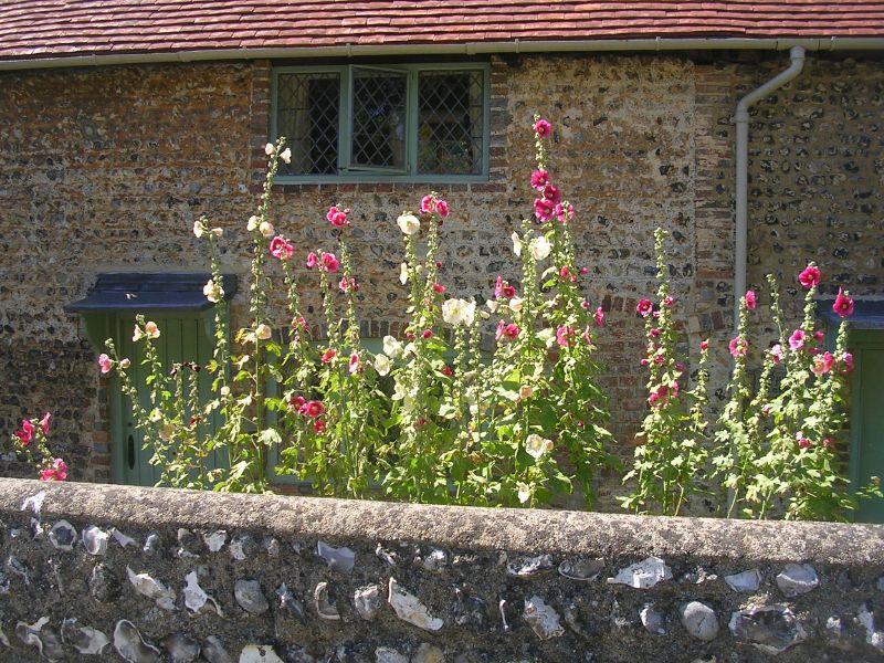 Hollyhocky house Glynde to Seaford