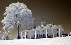 Pecan Tree and Mount Vernon