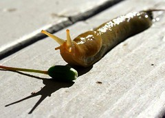 Thumbnail image for 3 Ways to Deal With Slugs in Your Garden