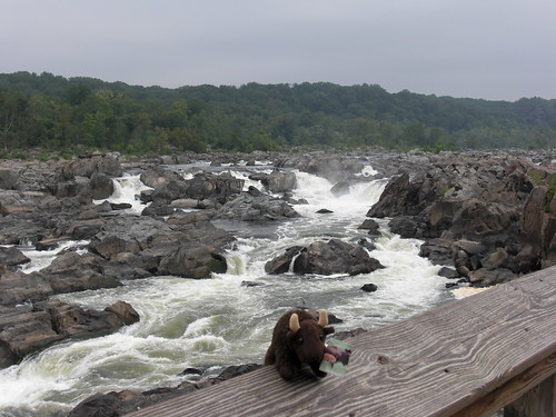 Buddy at Great Falls