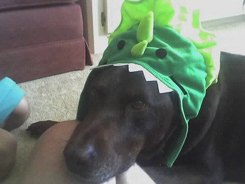 Hank the magic dragon