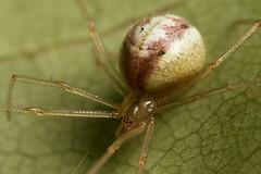 web spider #1