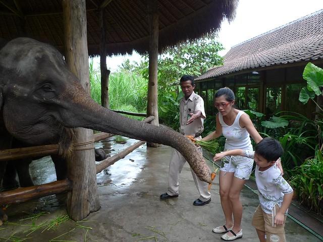 Bali Ubud Set 6 - Bali Safari & Marine Park