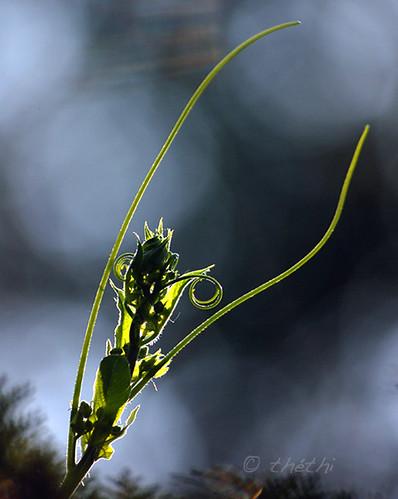 plante belgium belgique jardin explore mai feuille wallonie inthesky bestof2007 supersix6 setmai mygearandmediamond ruby15 setmorethan25forexplore20062007 végétauxquot faves43 setvegetaux albummai