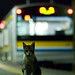 train, kitty, platform, the night. by Yohei Morita