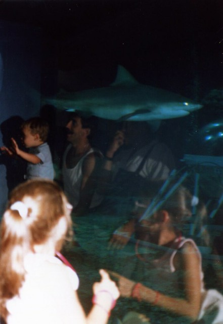 the shark at the living seas, aug '87