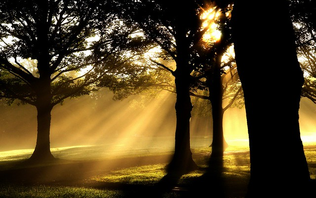 Morning sunbeams dancing with the trees