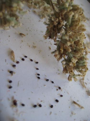 seed love