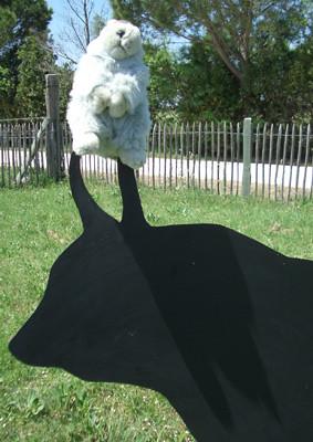 Camargue ... Karla Kunstwadl ... weiße Pferde, schwarze Stiere, rosafarbene Flamingos ... Foto: Brigitte Stolle