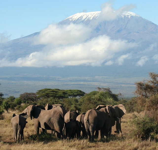 Amboseli National Park Kenya  City new picture : Amboseli National Park, Kenya | Flickr Photo Sharing!