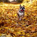 English Autumn by Cheap Photos