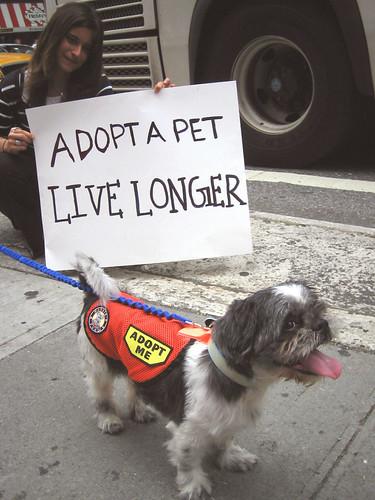 Adopt a Pet, Live Longer!
