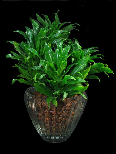 Inside urban green low light low maintenance janet for Low maintenance indoor plants