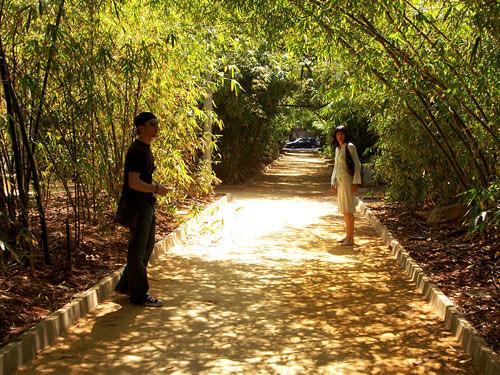 Bamboo-Tunnel