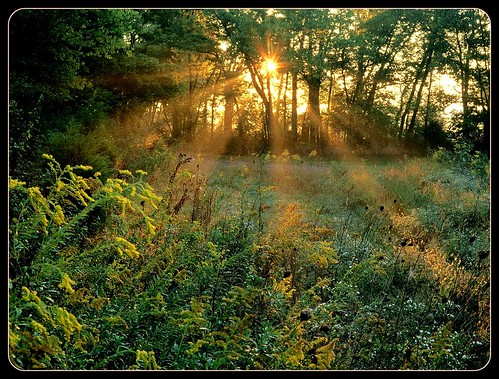 sunset sun green nature yellow forest orhei supershot multimegashot