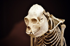 skeleton, head, close-up, jaw, bone, skull,