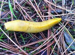 vegetable(0.0), produce(0.0), food(0.0), animal(1.0), yellow(1.0), invertebrate(1.0), insect(1.0), macro photography(1.0), fauna(1.0), slug(1.0),