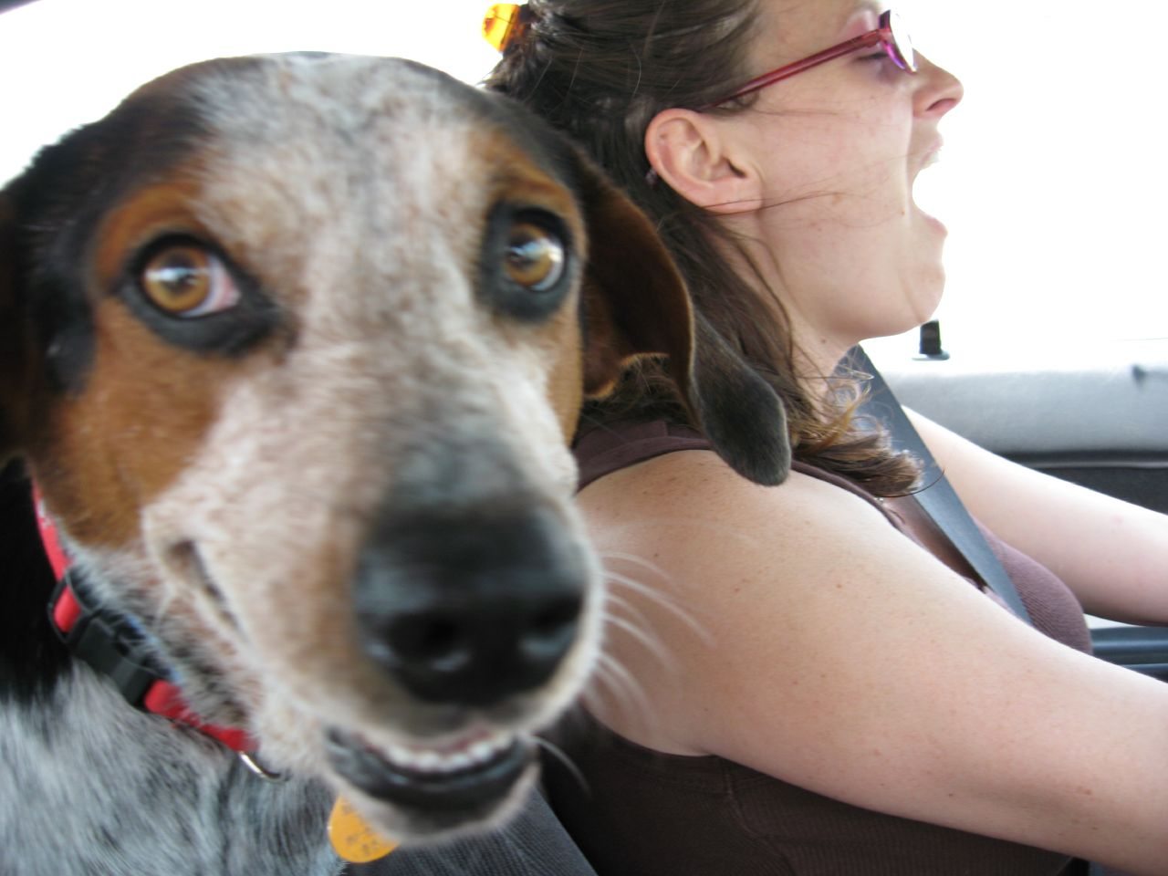 ensurring safety of pet animals while driving