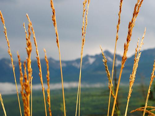 canada alberta golden mountain tree view nature 2007 happysleepy magdawojtyra happysleepycom artistlife