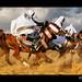 Ride Like a Wind ! by Bashar Shglila