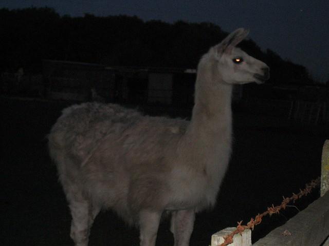 Spooky Llamas 533708662_c6901a8a88_z
