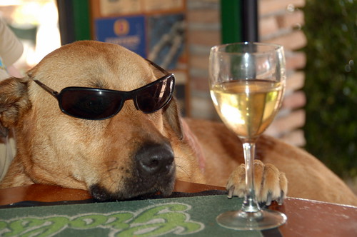 Cool Cat Dog