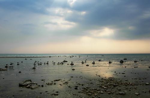 sunset vacation sky seagulls beach water clouds point sand nikon cottage calm clark coolpix lakehuron shoal p4 southwesternontario