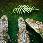 Photo Exotarium - Ferme de reptiles