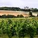 Vineyard near Chinon by Saskya