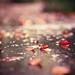 Fallen leaves with falling rain... (explore) by Olivia L'Estrange-Bell