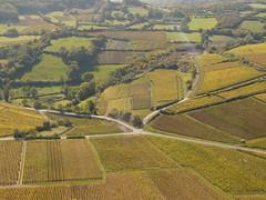 Au coeur des vignes de Pouilly