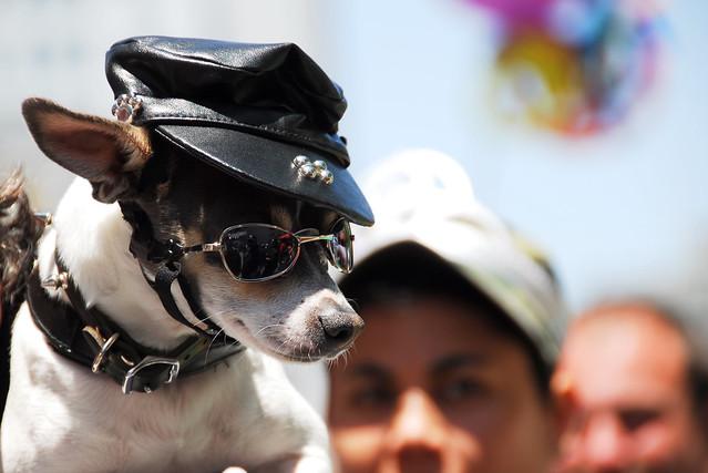 one cool dog