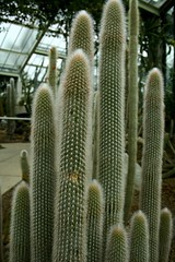 plant, cactus family,