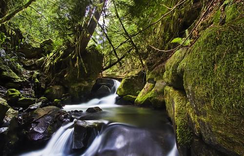 longexposure green creek forest canon river eos rocks stream baker falls rapids 7d lush cascade 1022mm