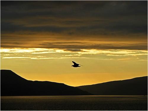 sunset norway geotagged sundown seagull explore fjord hurtigruten nordkapp explored mageroya kafjorden honnigsvag finnmarkfylke geo:lat=7096485632 geo:lon=2598527683