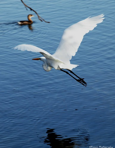 It's only when you're flying above it that you realize how incredible the Earth really is. ~ Philippe Perrin~