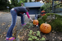 rachel positions some jack o lanterns she carved out…