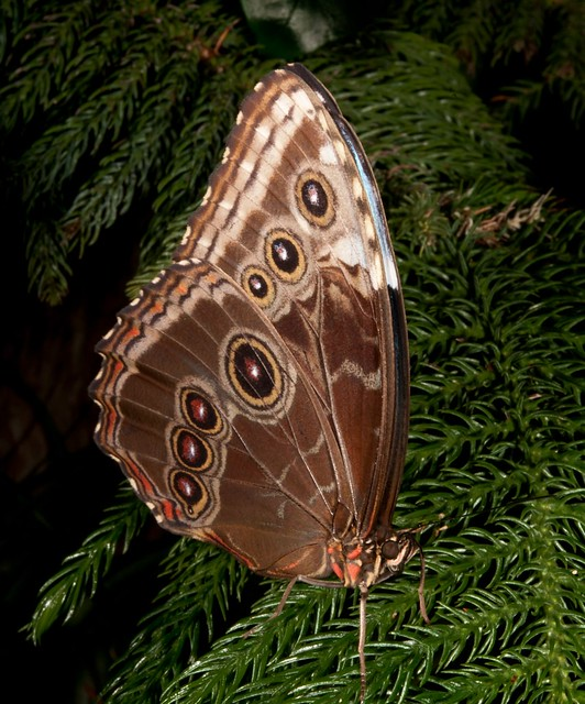 American Museum of Natural History Live Butterfly Exhibit