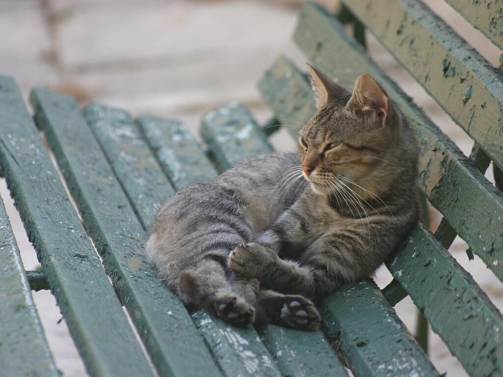 Cats of San Antons Garden - 1