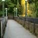 Seattle's Washington Park Arboretum