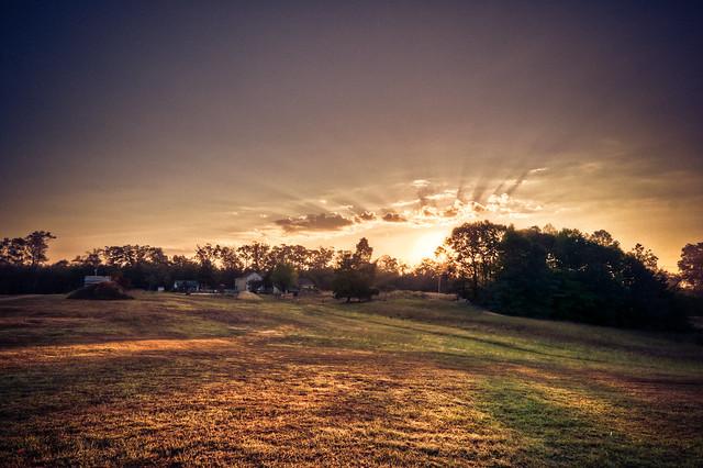 Open Fields in the Morning