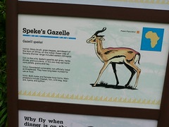 Specklet can has gazelle?