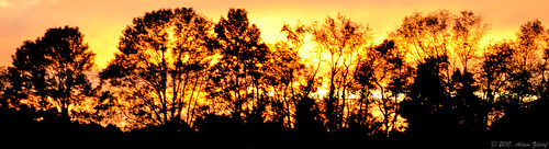 sunset sun tree field silhouette newjersey dusk d5000