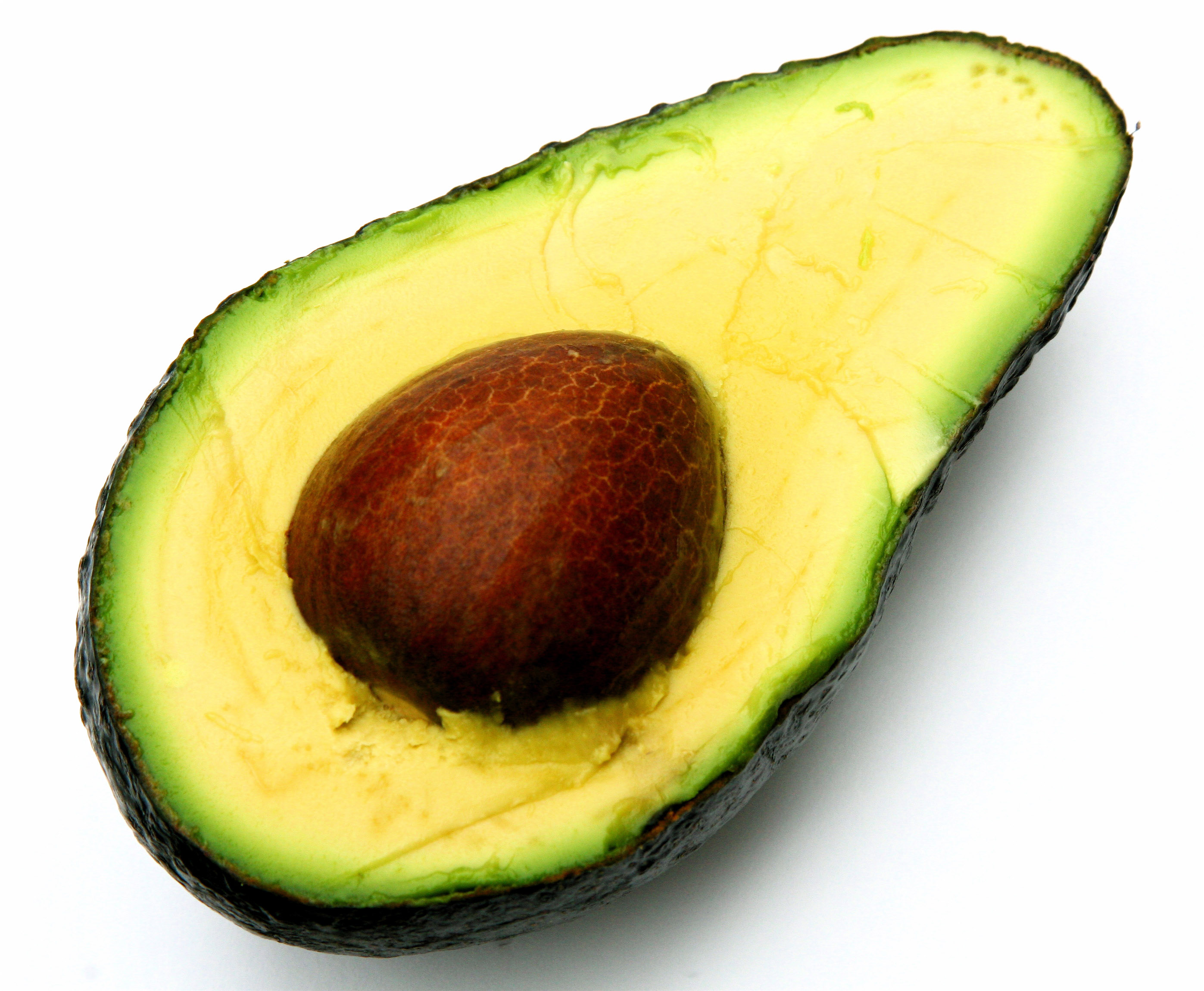 Can I give my dog avocado?