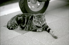 June 2010: Film Only Month: Peace the Cat in Kodak BW400CN