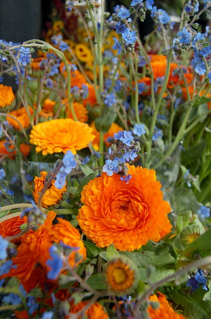 Blue And Orange Flowers | www.imgkid.com - The Image Kid ...